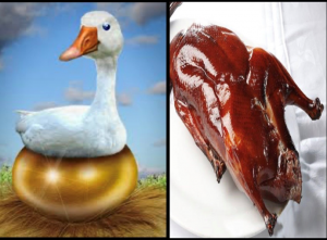 From golden goose to roast goose